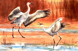 Sandhill Cranes Dancing