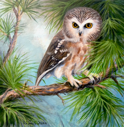 'ROCKY' Saw-Whet Owl