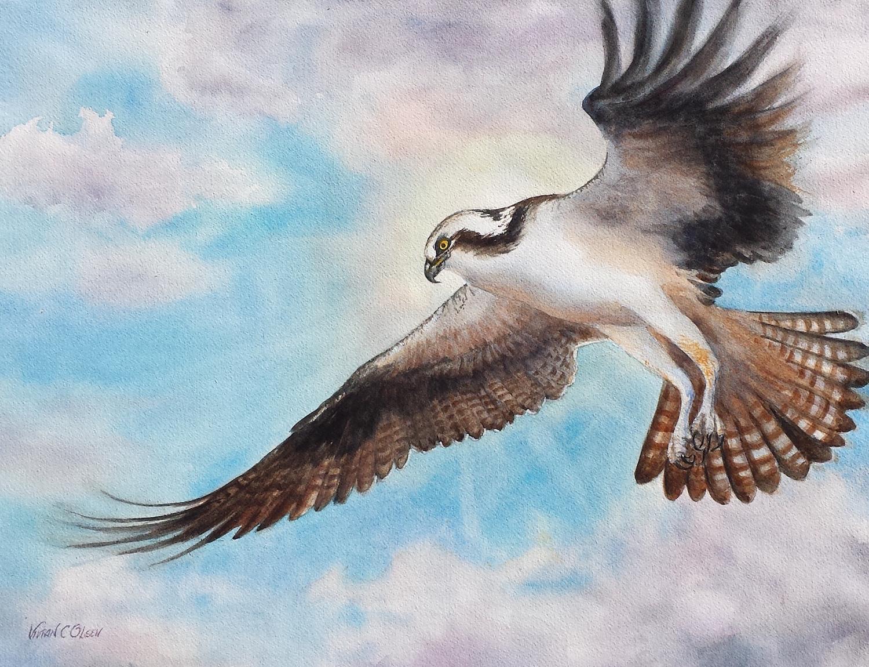 """Soaring Osprey"""