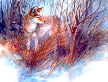 Coyote on Alert_Vivian Olsen.jpg