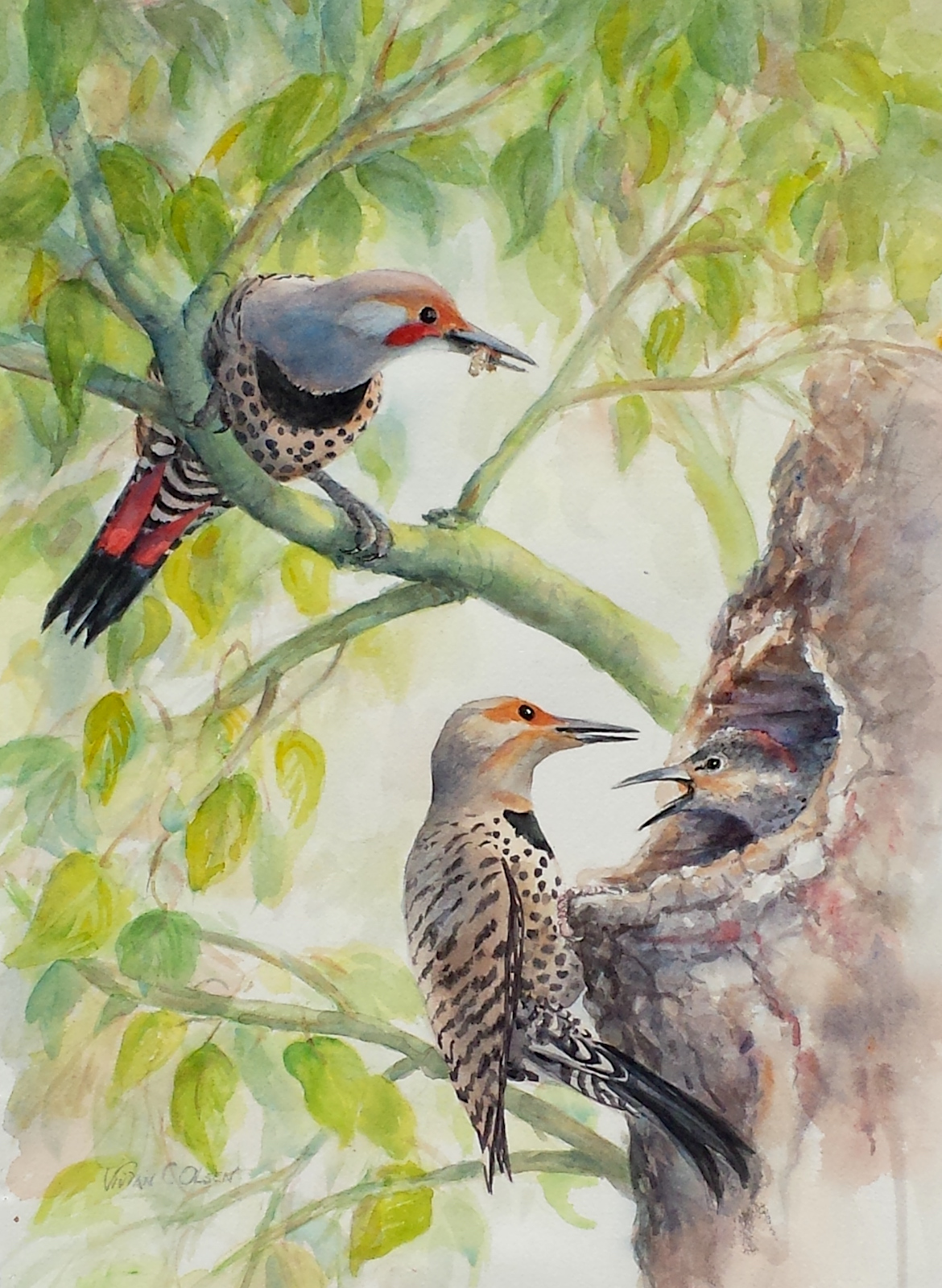 """Northern Flickers"""