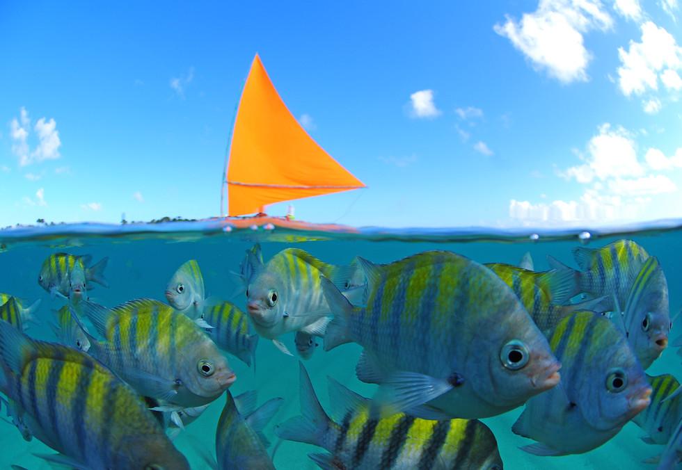 ThiagoCavalcantisub - jangada e peixes.j