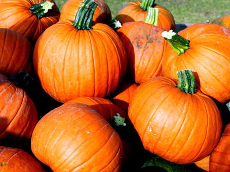 Reduce Food Waste This Halloween