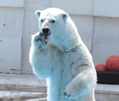 札幌円山動物園が営業を再開しましたよぉ!