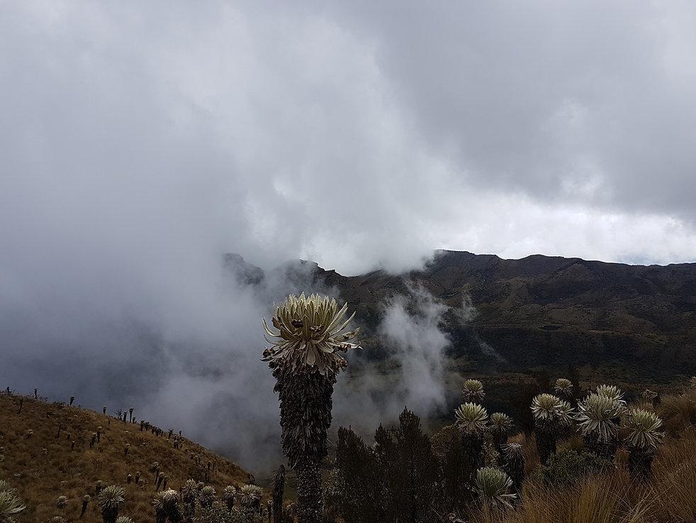 Treck dans le Paramo de Oceta, le plus beau Paramo de Colombie.