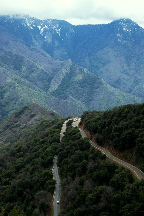 Route de Sequoia Park