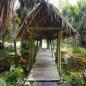 Réserve naturelle en Amazonie : Dormir à Habitat Sur