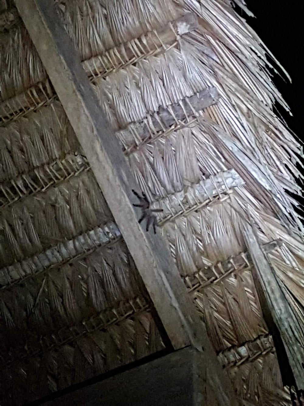 Les insectes en Amazonie, a quoi s'attendre ?