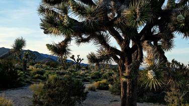 Une journée de le Joshua Tree National Park