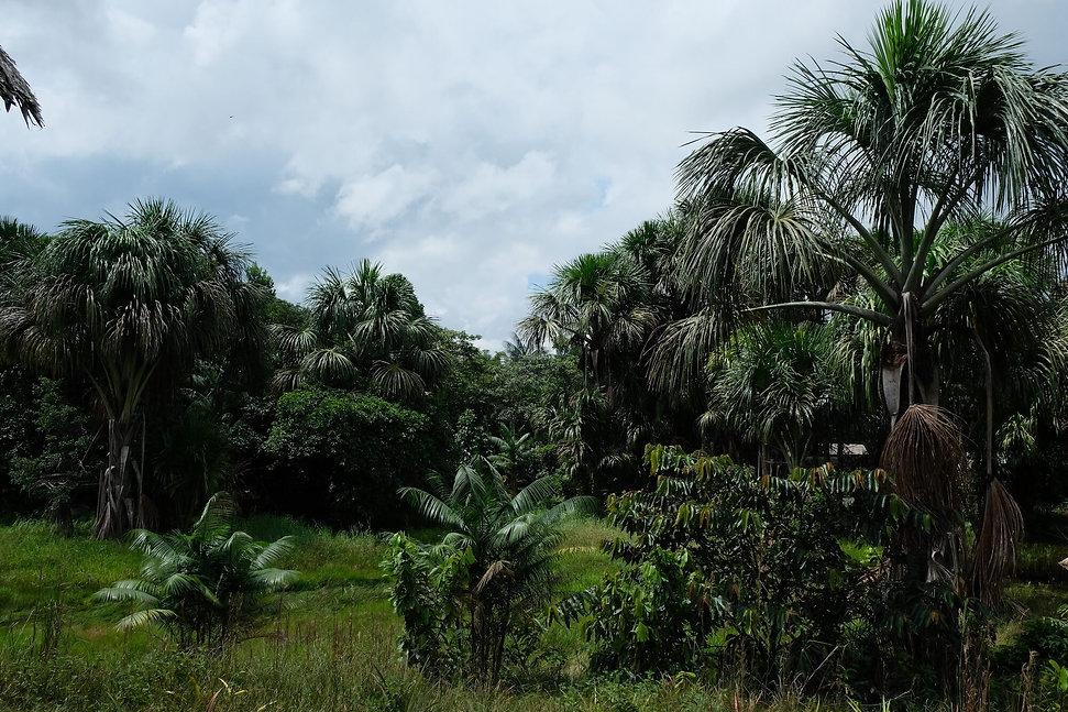 Randonnée en Amazonie Colombienne