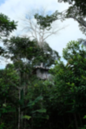 Quel hôtel choisir en Amazonie proche de Leticia en Colombie ?