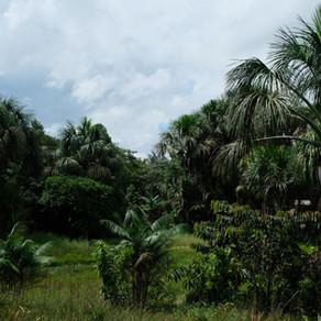 L'Amazonie en saison des pluies, à quoi s'attendre ?