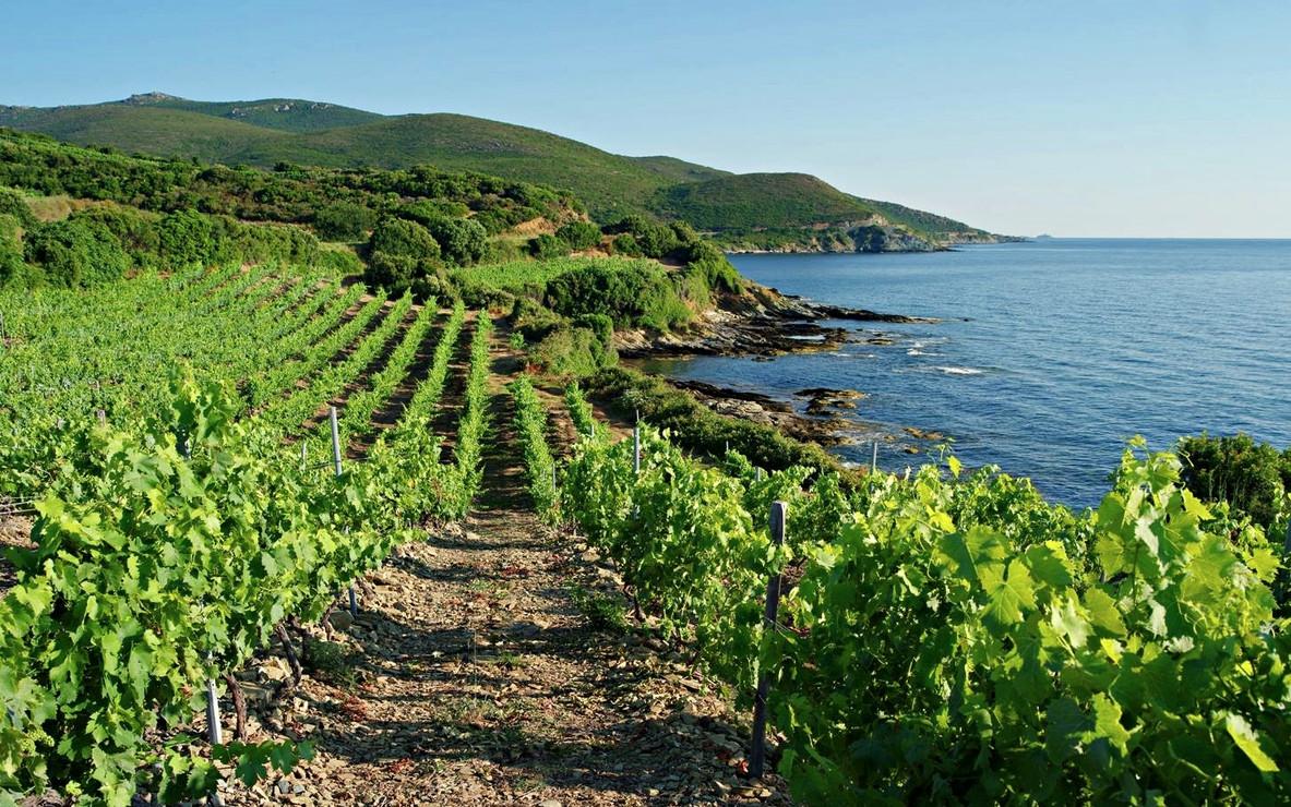 Vignoble de Haute Corse