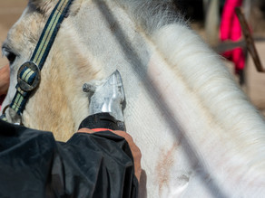 How To Avoid Clipper Lines On Your Horse