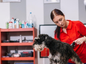Giving Good Customer Service as a Groomer