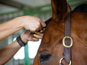 How To Plait for Dressage
