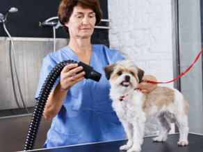 Health Concerns being a Groomer