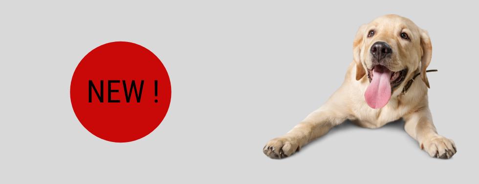 DOG GROOMING SCISSORS (6).png