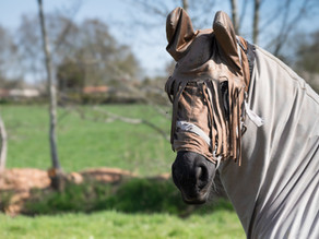 Keep your horse itch-free this month