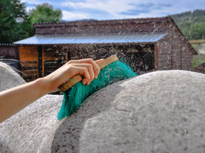 Horse Grooming Tips for Spring