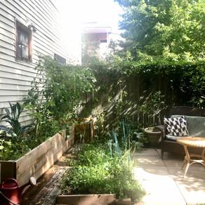 Un jardin comestible dans votre cours!
