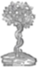 serpent tree_edited_edited.jpg