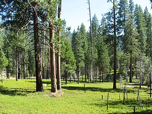 illilouette-creek-yosemite-meyer2.jpg