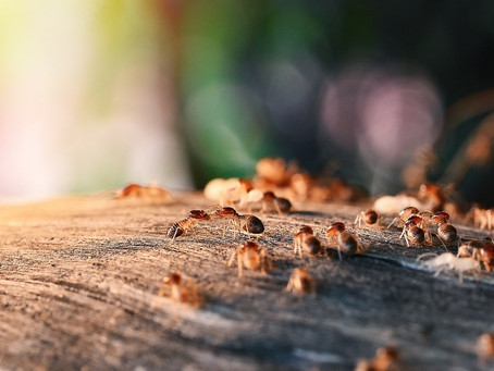 Termites in Oklahoma: What You Need to Know