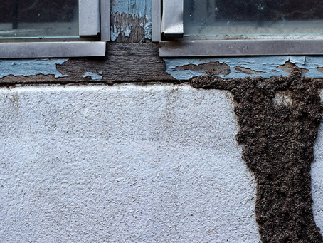 Home Termite Inspection: What to Expect