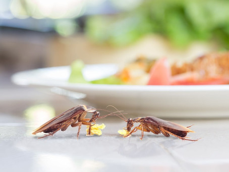Do Cockroaches Bite?