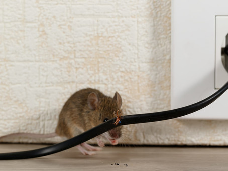 When to Call an Exterminator for Mice