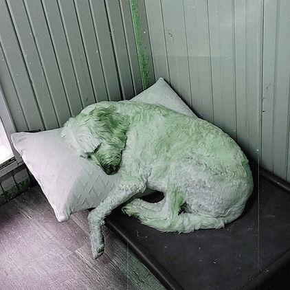 Boarding dog sleeping