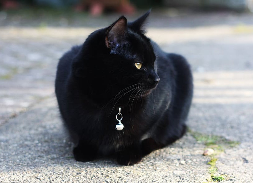 cat-black-cat-black-animal.jpg