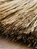brush-4765641_1920.jpg