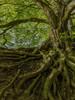 tree-3385957_1920_edited_edited_edited_e