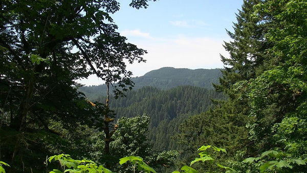 A mountain with trees.