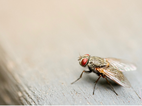 Who Killed the Fly that was Sitting on the Wall? A Cautionary Tale
