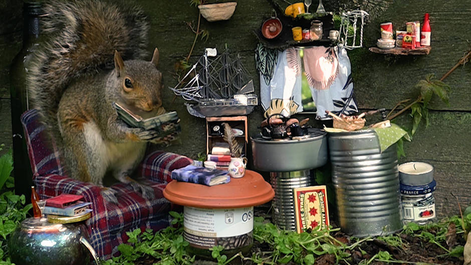 PapaSquirrelReading_1080p.mp4