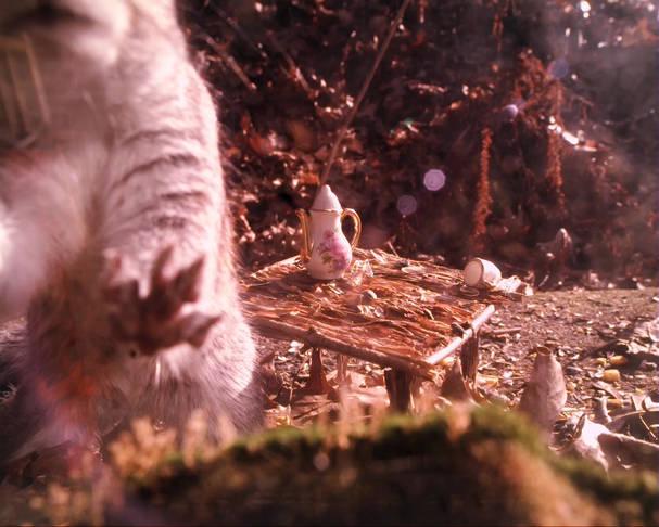 Squirrel_blooper_closeUp.mp4