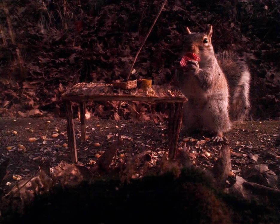 Squirrel_picnic_napkin_gyro_cropped.mp4