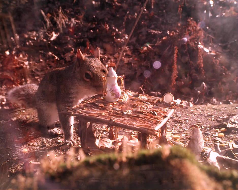Squirrel_teaTime_faceoff.mp4