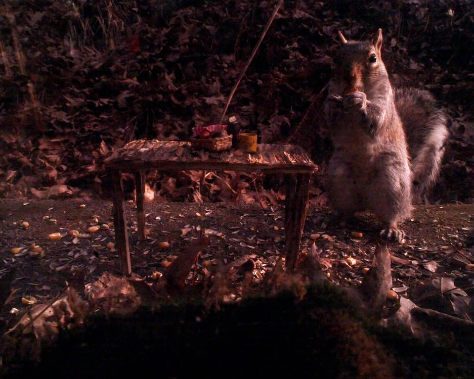 Squirrel_picnic_almond_hop.mp4