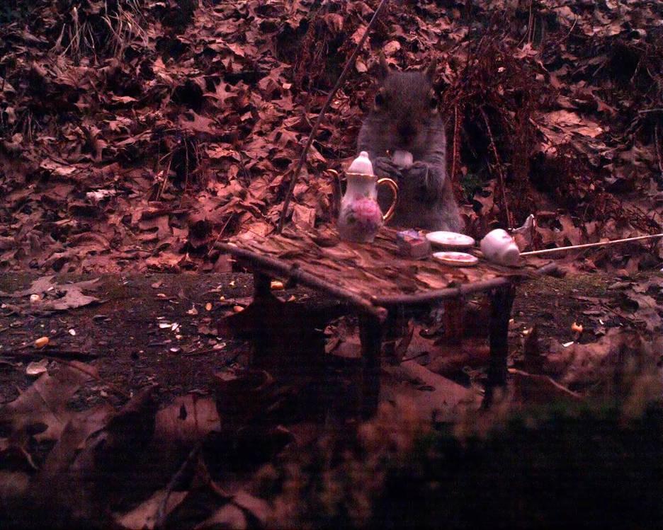 Squirrel_teaTime_teaCup_cut.mp4