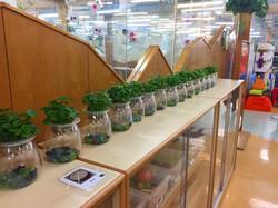 幼園兒植物