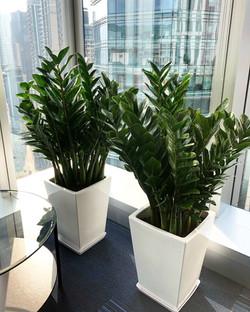 辦公室保養植物
