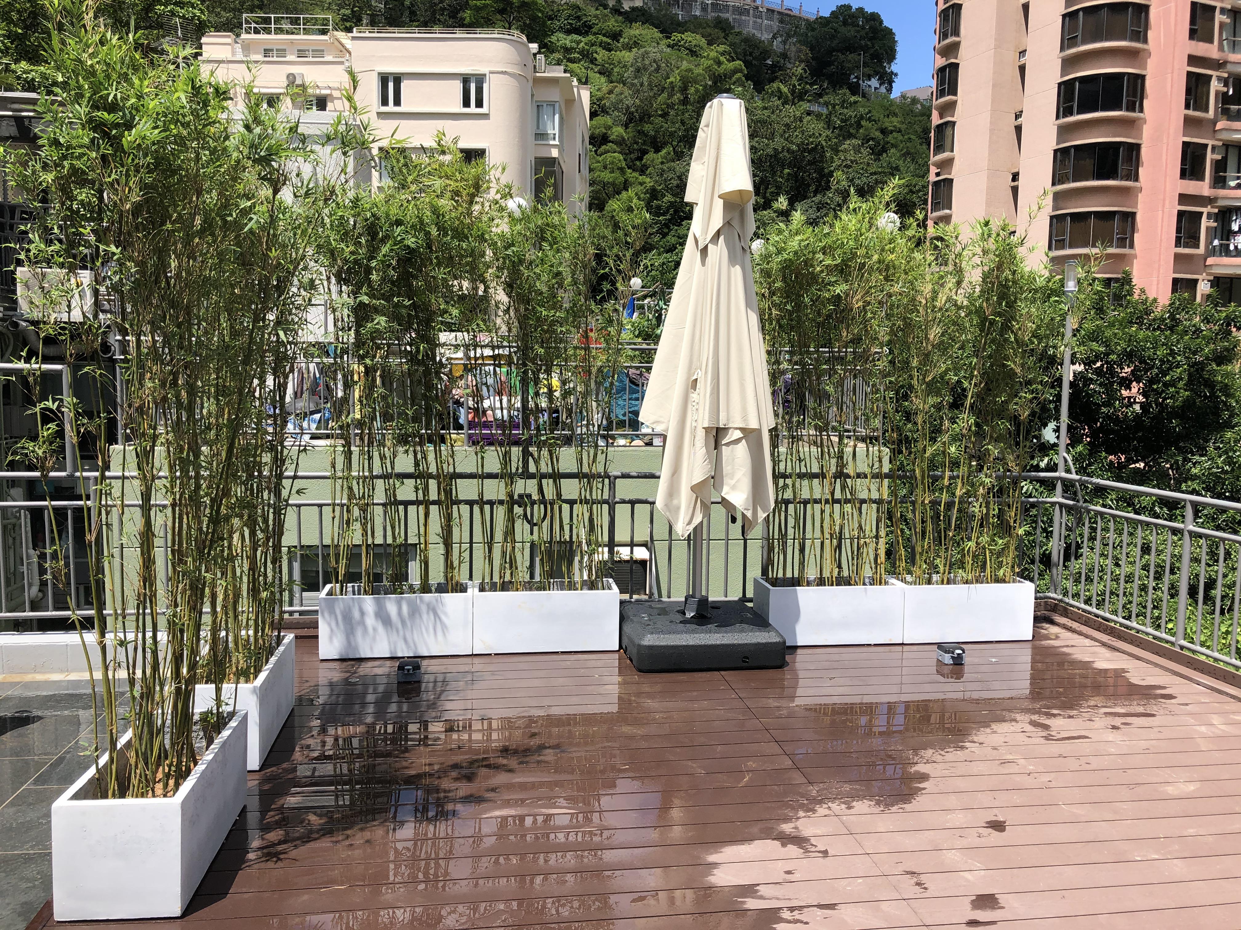天台花盆種植