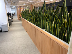 辦公室植物保養