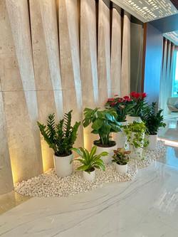 設計辦公室植物擺設
