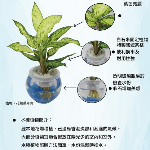 水栽植物介紹
