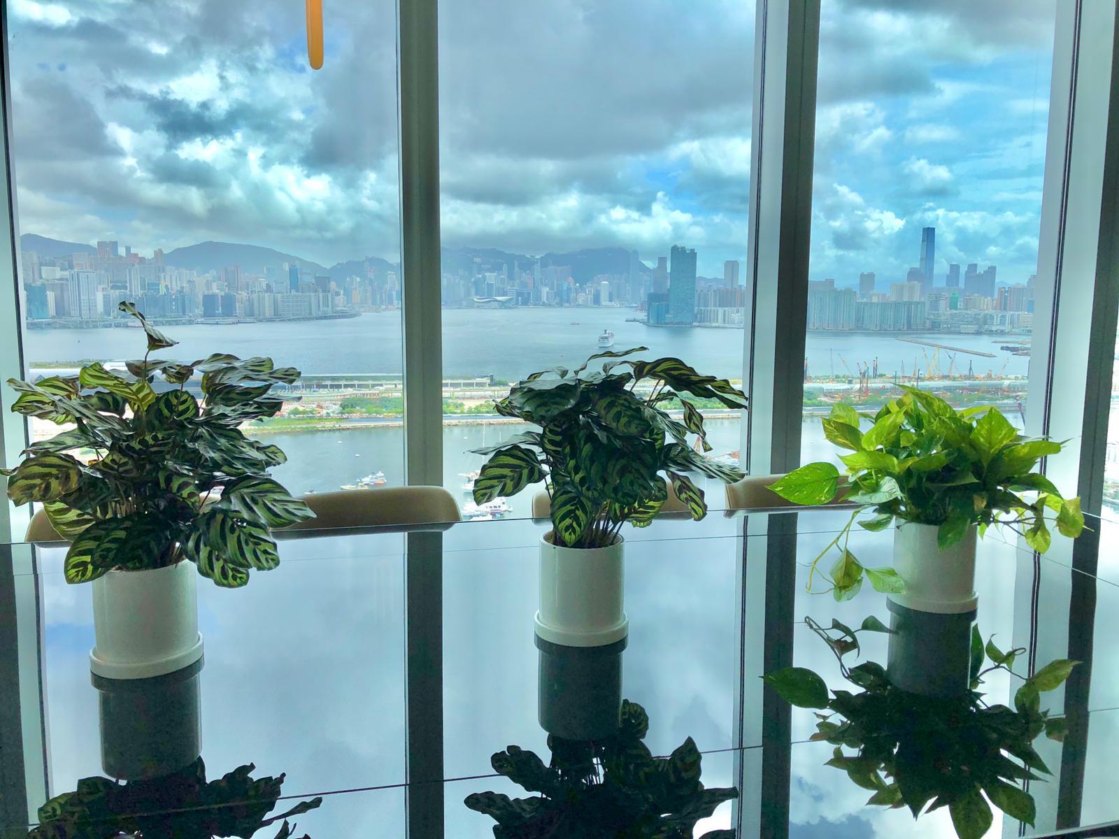 辦公室枱面植物
